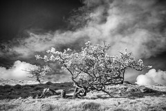 Mennock Wood_3 (Dylan Nardini) Tags: uk trees light sky nature lines clouds ir scotland countryside sanquar infrared shape mennock
