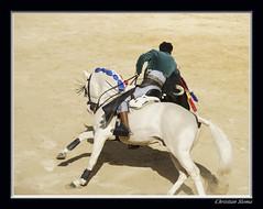 _DSC0104-2 (chris30300) Tags: france les cartagena corrida toro palavas rejon palavaslesflots flots languedocroussillonmidipyrnes languedocroussillonmidipyrn