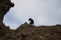 4mai_Thorbjorn_036 (Stefn H. Kristinsson) Tags: dog mountain dogs iceland spring hiking may ma vor hundur sland ganga fjallganga tamron2875mm grindavk hundar grindavik orbjrn nikond800 thornbjorn orbjarnarfell