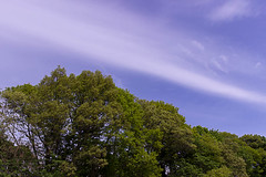 The Arnold Arboretum of Harvard University, May 21, 2016 (BostonPhotoSphere) Tags: arnoldarboretum arboretum harvarduniversity
