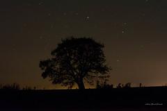 Compaero de las Estrellas (Marcelo A. Caraballo) Tags: nikon d5200 arbol nocturna parana entrerios
