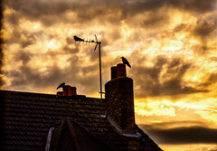 Brexit Sunset (cuppyuppycake) Tags: uk roof sunset chimney england sky cloud london birds nikon outdoor dusk antenna d7200 brexit