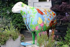 A sheep in the sun (Cumberland Patriot) Tags: sun sheep painted go cumbria trust calvert the ewe in cumbrian herdwick a goherdwick