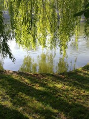 (Artibani Francesco) Tags: lake reflection tree green nature water beauty photography day sunny spot francescoartibani