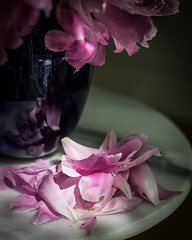 Pile of Peony Petals (Explored) (lclower19) Tags: odc peony petals flora flower vase tabletop stack explored stilllife