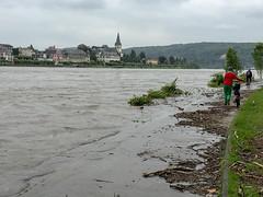 berschwemmtes Rheinufer (drloewe) Tags: wood madera bonn rhine holz rhein rheinufer hochwasser badgodesberg remagen radwege lebenskunstmarkt