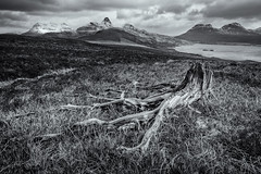 Tree Stump and Stormy Stac Pollaidh (amcgdesigns) Tags: sky blackandwhite monochrome clouds mono stormy drama hdr treestump stacpollaidh assynt canon1022mm silverefex druimbadaghaill cloudsstormssunsetssunrises andrewmcgavin eos7dmk2 andrewmcgavin