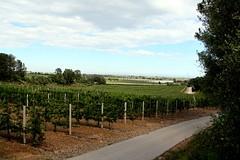 Manzanos (Xaviort) Tags: apple countryside arboles campo production appletree airelibre manzanos vinyolsielsarcs