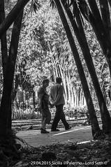 Palermo (Lord Seth) Tags: bw italy nikon candid streetphotography palermo sicilia biancoenero canne 2015 giardinobotanico d5000 lordseth