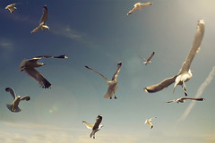 I See You (MilaMai) Tags: light sky cloud birds canon finland fly flying seagull loveit mygearandme