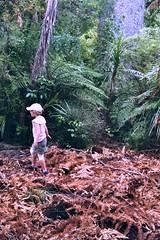 walking on dead ferns (mikeasaurus) Tags: pink trees newzealand summer brown holiday green nature kid fuji child sommer exploring natur 200asa olympus nz grn braun ferns westcoast downunder trip35 colorfilm aoteoroa autaut december2011