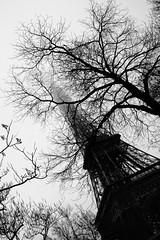La plus haute... (Marsaliath) Tags: trip viaje trees bw white black france byn blanco fog canon eos 350d big rboles torre tour negro eiffel bn alta tall francia niebla bnw haute pars marsaliath