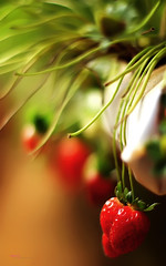 Strawberries Highway (Haryth Hayqal) Tags: red nature fruit strawberry bokeh