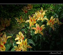 Parco Giardino Sigurt (08) (Mau1962) Tags: parco giardino sigurta