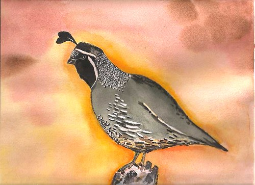 California Quail - Original Watercolor