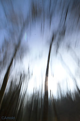 (justyourcofchi) Tags: wood uk trees light england sun abstract blur art nature forest woodland drag countryside spring movement model woods flickr photographer walk wildlife move surrey shutter ambient environment dragging tillford chiarnold justyourcupofchicom justyourcupofchi