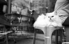 Gaze upon Society 凝視於無 (Vincentli*) Tags: street film monochrome animal rollei cat hongkong blackwhite nikon doubleexposure d76 analogue 24mm nikkor ais blackwhitephotos