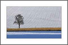 einsam (lonely) (alfred.hausberger) Tags: winter tree bavaria felder lower baum niederbayern dorfbach updatecollection
