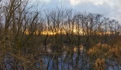 Fire Swamp (cosmosvortex_2006) Tags: wet photoshop canon fire washington frames tripod 7 9 sigma panoramic swamp frame 1855mm lands per hdr plugins topaz exposures t2i photoengine worldhdr oloneo tukwilarenton