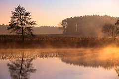 dance on the water (Rotweiss.TV) Tags: sun lake water fog landscape see warm wasser nebel foggy teich landschaft sonne earlymorningfog frhnebel neblig