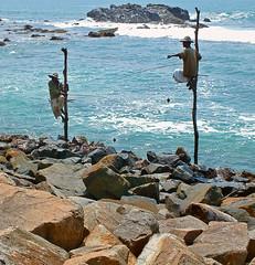 Stilt Fishermen of Kathaluwa (jo92photos) Tags: sea fish water wooden fishing fuji indianocean catch poles srilanka hs20 stiltfishermen ©allrightsreserved challengeyouwinner myfuji kathaluwa jo92photos cyunanimous hs20exr stiltfishermenkathaluwa
