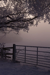 Haunting (jillyspoon) Tags: winter cold tree countryside gate mood hoarfrost atmosphere eerie mysterious haunting february icy minus flickrduel willinghambystow fillinghamlane