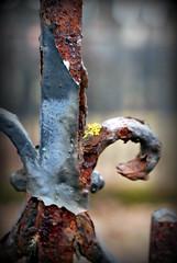 Rusty fence (Sol Brimars) Tags: macro cemetery metal fence iceland moss spring decay rusty reykjavik peelingpaint cracked ísland 2012 ecu oxidized hólavallagarður