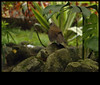 Ajeitando as plumas/Straightening feathers (Ricardo Venerando) Tags: life park green bird nature animal brasil wildlife natureza olympus aves explore abc discovery soe naturesfinest ornitologia conservacion nationalgeografic platinumphoto abcpaulista diamondclassphotographer ysplix grandeabc goldstaraward ricardovenerando