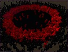 Metamorphoses by Merlino Mayo 179 (Merlino Mayo) Tags: sculpture art video arte linden sl secondlife mantova lea daphne myth metamorphoses 2012 2010 ovid gigantes virtualworlds 2011 metamorfosi tezza giulioromano palazzote cosmogony theelements agesofman merlinomayo lindenendowmentforthearts elmentum tejeto fullsimproject publiusovidius tilietum