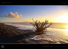 Monster from The Deep (tomraven) Tags: sea newzealand sky storm clouds island driftwood hdr kapitiisland otakibeach tomraven bestcapturesaoi aravenimage q12012 flickrstruereflection1 flickrstruereflection2 flickrstruereflection3