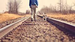 Tracking (Victoria Hederer Bell) Tags: railroad winter dog sun man beagle weather wisconsin lensbaby rural canon outside spring nice warm exercise walk country tracks sunny 7d lippy elijah composer temperatures composerpro victoriahedererbell edge80
