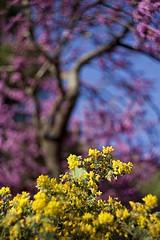 Primavera (miratumismo) Tags: barcelona primavera 2012 helios 582 44m 5dmk2