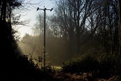 (drfugo) Tags: light sun sunrise dawn telephone cable pole canon5d shrub bushes telegraph crawley firebreak nikkoroncanon nikononcanon nikon55mmf12s driverswood nofunnythingstosay nikkors55mmf12typeiv