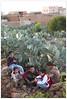 _MG_4963 (Clement Guillaume) Tags: africa loft northafrica north agadir morocco maroc granary afrique grenier fortified berbère greniers afriquedunord المغرب maghrib royaume almaghrib amazigh fortifiedgranary igherm aïtbaha igoudars aitbaha ighrems agadirigherm agadirdikoulka ikoulka
