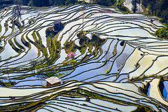 Hani's Rice Terraces at Yuanyang, Yunnan Province, China - V-A-K