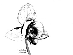 flower blooms (art9lim) Tags: world light wild bw white black flower art nature floral monochrome illustration pen hoop ball dark painting point see sketch day shot serious blossom drawing earth top smoke illustrated birth fine arts picture first peak line summit come bloom law tribute draw staring tobacco begin forces illust naturally glaring artisiic newblown