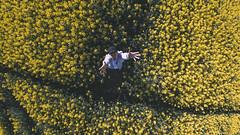 Camera tossing (fujinliow) Tags: flower spring cameratossing toss colourful cameratoss fisheyelens rapeseed oilseedrape rapeseedfield samyang75mmf35 samyang75mmfisheye