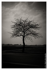..:: alone ::.. (bora_binguel) Tags: tree nature germany bayern deutschland bavaria blackwhite nuremberg natur schwarzweiss baum nrnberg nuernberg aa doa almanya bobidigitalphotography