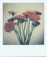 Bright, floral still life (matthewjoldfield) Tags: flowers stilllife colour polaroid petals warm bright beta 600 stems onwhite slr680 bottomup mindseye testfilm impossibleproject notshaddows