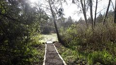 20160331_090122 (ks_bluechip) Tags: creek evans trails preserve sammamish usa2106