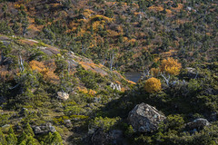 Autumn Contrasts (Cameron Semple - http://highandwide.com.au) Tags: bushwalking fagus mountfield tarnshelf