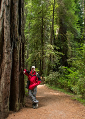 RN&SP5202016-38 (Ranbo (Randy Baumhover)) Tags: california forest t redwoods redwoodnationalpark