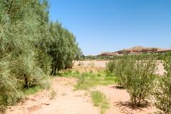 064 (Michael Williams Photography) Tags: atlasmountains morocco marrakech approved ouarzazate saharadesert atbenhaddou doorofthedesert siteofnumerousmovies exampleslawrenceofarabiajewelofthenilelasttempationofchristgladiatorusedinpartsofgameofthrones