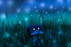 Danbo Kitty (Nova Fotografie) Tags: art cat lights kitty katze lightroom danbo danboard