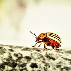 (K@spa) Tags: joo reganha jooreganha kspa bug insecto bicho macro
