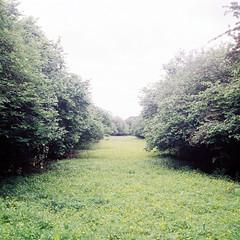 Boggy_HIdden (Adam_Twigger) Tags: color green 120 nature grass fuji buttercup weekend saturday hidden medium format exposed boggy