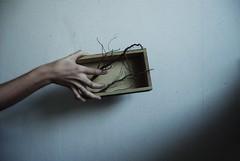 (stardust) Tags: hand mano self box caja roots raices nostalgia bedroom habitacion life