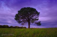 Joondalup Lake (JamieMarie Oaksford) Tags: winter tree green nature skyscape landscape nikon dusk australia perth westernaustralia joondalup purpleskies westernasutralia joondaluplake winterinperth nikond7000
