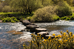 Stepping stones at Week Ford, Dartmoor (Keith in Exeter) Tags: uk england plant nature water grass yellow creek river landscape countryside nationalpark rocks stream crossing outdoor path devon riverbed gb steppingstones bushes dartmoor dart sparkling gorse weekford