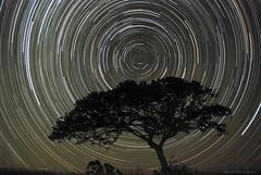 Star Trails El Quintral (Mario Pereda Reyes) Tags: chile de star san trails mario el v nocturna antonio provincia region domingo santo reyes startrails santodomingo pereda quintral marioperedareyes elqintral